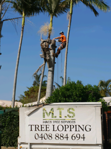 Tree Removal Beenleigh